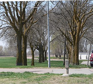 Duncan, Nebraska - Route of the Lincoln Highway through Duncan. The concrete marker in the right foreground points toward the avenue of hackberry trees through which the highway passed.