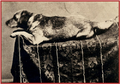Lincolns-Dog-Fido-IDH-2.png