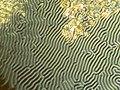 Liquid crystal fingerprint texture 2.jpg