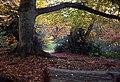 Log and tree (7051985747).jpg