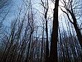 Louisiana Purchase State Park 006.jpg