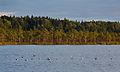 Luhasoo maastikukaitseala 2013 08.jpg