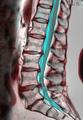 Lumbar Spine 111353-rgbcb.png