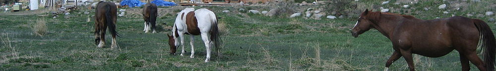 Lumpytrout Montana wikivoyage page banner Horses.jpg