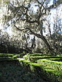 Magnolia Plantation and Gardens - Charleston, South Carolina (8555496637).jpg