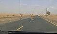 Majestic... Camel on Roads.jpg