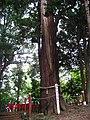 Makatajinjya-goshiboku.funagata-narita-city-,japan.jpg