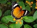 Malaysia - Penang Butterfly Gardens - 07 (5208363675).jpg