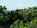 Mameyes II, Río Grande 00745, Puerto Rico - panoramio (14).jpg