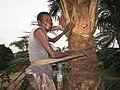 Man climbing a palmtree.jpg