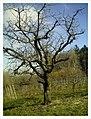March Denzlingen - Master Season Rhine Valley Photography - panoramio (14).jpg