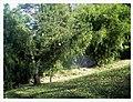 March Spring Bambus Botanischer Garten Freiburg - Master Seasons Rhine Valley Photography - panoramio (3).jpg