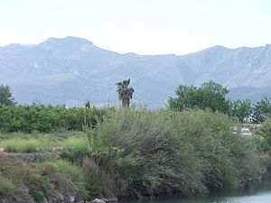 Marjal i Estany de la Ribera Sud del Xúquer 01.JPG