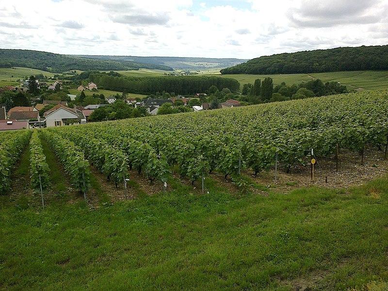 Marne Cormoyeux Forets et Vignes 22062016