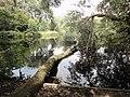 Meer en Bos park - Den haag (4).jpg
