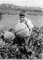 Melon de Montreal, 1935.jpg