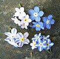 Mendel-flowers.jpg