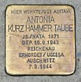 Meran Stolperstein Antonia Kurz Hammer - HallergasseTaube.jpg