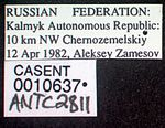 Messor caducus casent0010637 label 1.jpg