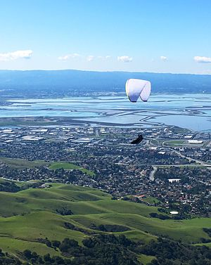 Mission Peak - A paraglider viewed from a Mission Peak Vista, late winter 2017.