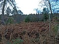 Mixed Woodland - geograph.org.uk - 630765.jpg