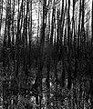 Mokradła - panoramio (2).jpg