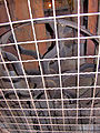 Molen Venemansmolen maalstoel aandrijving.jpg