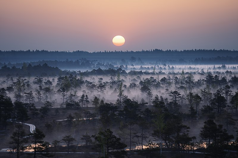 File:Morning fog in Kemeri.jpg