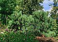 Moscow BotanicalGarden 2622.jpg