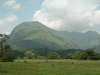 Mount Nimba Strict Nature Reserve-108450.jpg