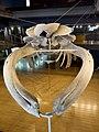 Museo Marítimo del Cantábrico (174).jpg