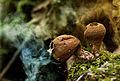 Mushroom magic (15371050373).jpg