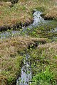 Muskeg watercourses 355.jpg