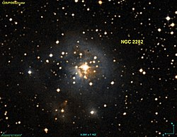 NGC 2282.jpg