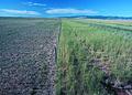 NRCSSD85008 - South Dakota (6199)(NRCS Photo Gallery).jpg