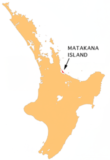 Matakana Island island