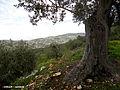 Nablus 1.jpg