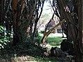 Naivasha Sopa Lodge (7513164722).jpg