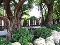 Nan Lian Garden, Banyan Grove (Hong Kong).jpg