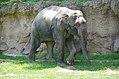 National Zoological Park, Washington DC, USA (14574961983).jpg