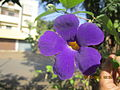 Native purple flower from India.jpg