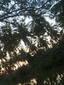 Nature at batlapalem.jpg