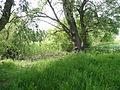 Naturschutzgebiet Heuckenlock 21.05.2014 Phase 116.JPG
