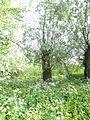 Naturschutzgebiet Heuckenlock 21.05.2014 Phase 22.JPG
