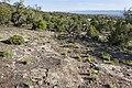 Near Billings Canyon - Flickr - aspidoscelis.jpg