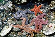 Echinoderms exhibit a wide range of colours.