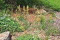 Neuer Botanischer Garten Marburg - 0012.jpg