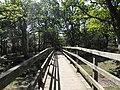 New Forrest - panoramio (1).jpg