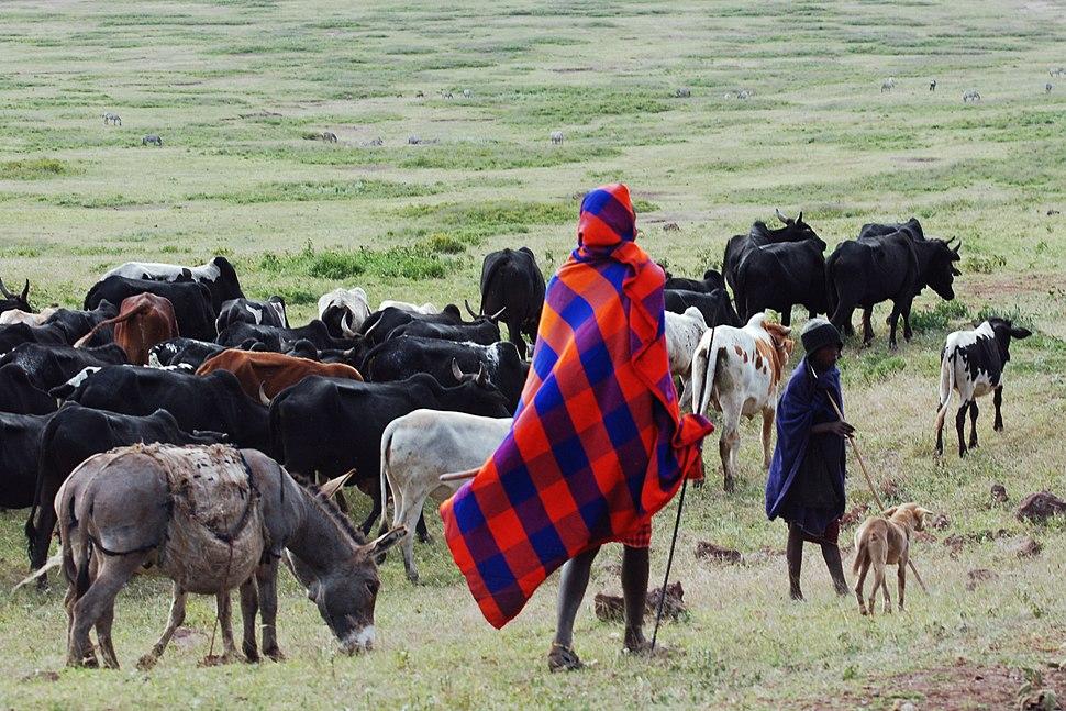 Ngorongoro 2012 05 30 2353 (7500935618)