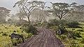 Ngorongoro Crater - panoramio (6).jpg